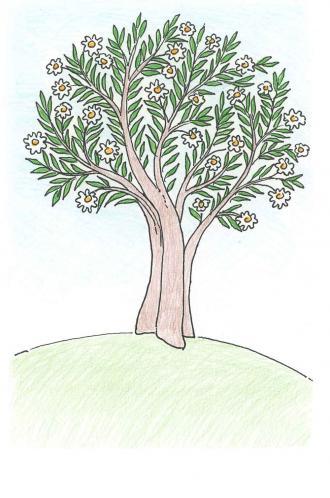 Wenn der Frühling kommt, werden die Bäume grün.